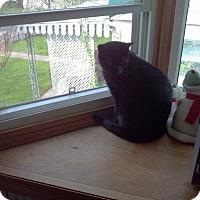 Adopt A Pet :: Parker - Saint Albans, WV