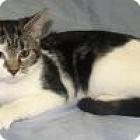Adopt A Pet :: Gilda - Powell, OH