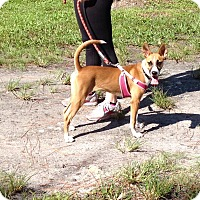 Adopt A Pet :: HOPE - Boca Raton, FL