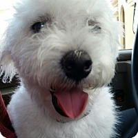 Adopt A Pet :: Monroe - Las Vegas, NV
