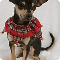 Adopt A Pet :: Franny - Winters, CA