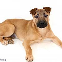 Adopt A Pet :: Case - Bloomington, MN