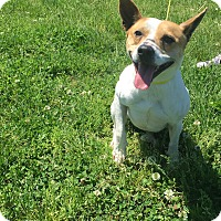 Adopt A Pet :: Jack - Gallatin, TN