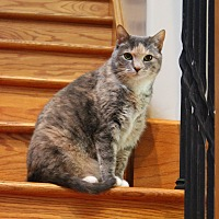 Adopt A Pet :: Sunnie - Carlisle, PA