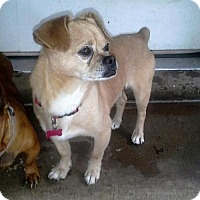 Adopt A Pet :: STEWIE - Franklin, TN
