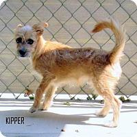 Adopt A Pet :: Kipper (Puppy) - Lindsay, CA