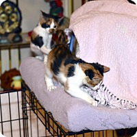 Adopt A Pet :: Fifi and Fiji - Fowlerville, MI