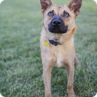Adopt A Pet :: Stetson - Salt Lake City, UT