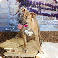 Adopt A Pet :: Tuesday - Lubbock, TX