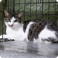 Adopt A Pet :: Adele - Marlinton, WV