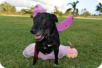 Labrador Retriever Mix Dog for adoption in Austin, Texas - Ruby