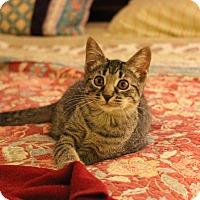Adopt A Pet :: Annie - Carlisle, PA