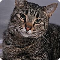 Adopt A Pet :: Crowley - Fort Leavenworth, KS