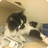 Adopt A Pet :: Teddy - Gardnerville, NV