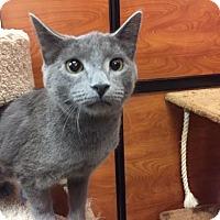 Adopt A Pet :: Cole - Smyrna, GA
