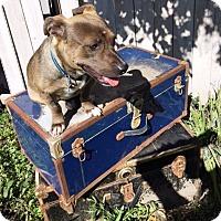 Adopt A Pet :: Floki - West Los Angeles, CA