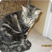 Adopt A Pet :: Simon - Sterling Hgts, MI