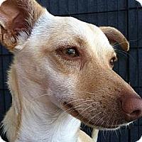 Adopt A Pet :: Wendy - North Hollywood, CA