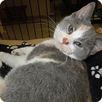 Adopt A Pet :: Rosetta - Medina, OH