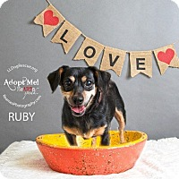 Adopt A Pet :: Ruby - Shawnee Mission, KS