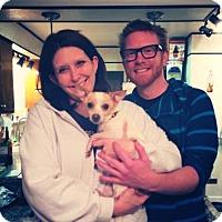 Adopt A Pet :: Peggy - Sacramento, CA