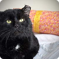 Adopt A Pet :: Grant - Xenia, OH