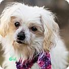 Adopt A Pet :: Fancy