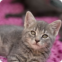 Adopt A Pet :: Sarah - Fountain Hills, AZ