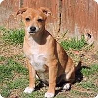 Adopt A Pet :: Jillian - McKinney, TX