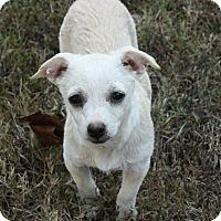 Adopt A Pet :: Chloe - Cranford, NJ