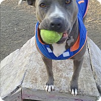 Adopt A Pet :: Jade - richmond, VA