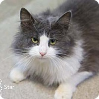 Adopt A Pet :: Star - Merrifield, VA