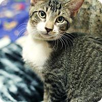 Adopt A Pet :: Bukowski - Appleton, WI