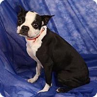 Adopt A Pet :: Fannie Mae Boston - St. Louis, MO