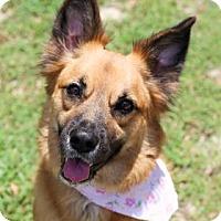 Adopt A Pet :: Cocoa - Lakeland, FL