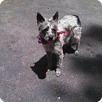 Adopt A Pet :: Laredo -MEET ME - Woonsocket, RI