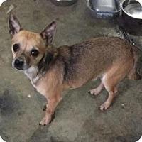 Adopt A Pet :: Houdini-FEE LOWERED - Union Grove, WI