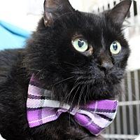 Adopt A Pet :: Timothy - Sarasota, FL