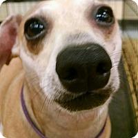 Adopt A Pet :: Benjamin - Madisonville, LA