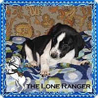Adopt A Pet :: The Lone Ranger - Medford, NJ