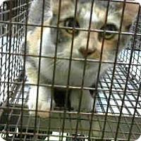 Adopt A Pet :: URGENT on 10/25 at DEVORE - San Bernardino, CA
