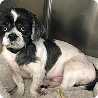Adopt A Pet :: Leo - Bronx, NY