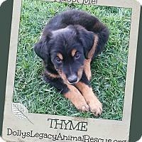 Adopt A Pet :: THYME - Lincoln, NE