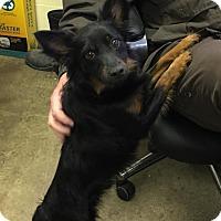 Adopt A Pet :: JINX - Cadiz, OH