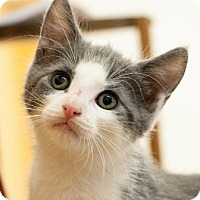 Adopt A Pet :: Curtis - Walworth, NY