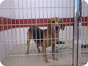 Basset Hound Mix Dog for adoption in Gloucester, Virginia - TUTTI