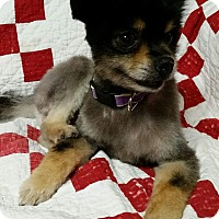 Adopt A Pet :: Nickolas Montgomery - Urbana, OH