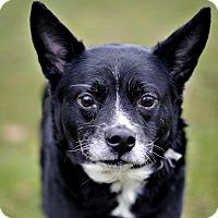 Adopt A Pet :: Baby - NO FEE - Sponsored - Midland, MI