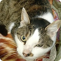 Adopt A Pet :: Pixie - Scituate, MA