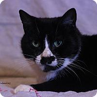 Adopt A Pet :: Roseabell - Flushing, MI